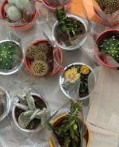 cactus Agevolando